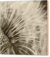 Dandelion 8 Wood Print