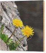 Dandelion Wood Print