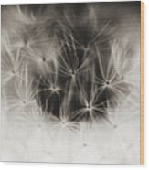 Dandelion Close-up Wood Print