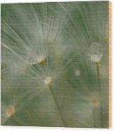Dandelion Dew Two Wood Print
