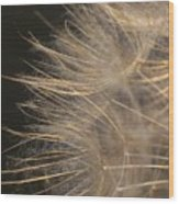 Dandelion Eighty Wood Print