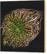 Dandelion Eye  Wood Print
