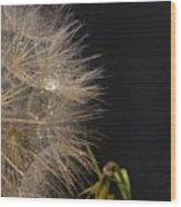 Dandelion Fifty Eight Wood Print