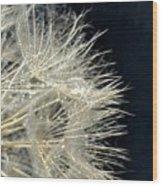 Dandelion Fifty Five Wood Print