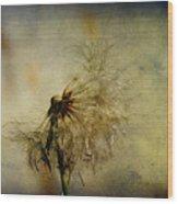 Dandelion Flower Wood Print