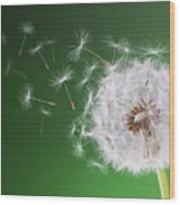 Dandelion Flying On Background Green Wood Print