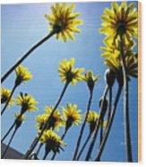 Dandelion Forest Wood Print