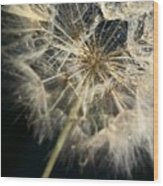 Dandelion Forty One Wood Print