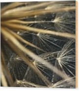 Dandelion Forty Three Wood Print