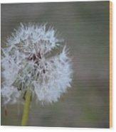 Dandelion Frost Wood Print