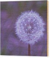 Dandelion Geometry Wood Print