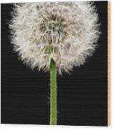 Dandelion Gone To Seed Wood Print