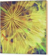 Dandelion Harvest Wood Print