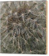 Dandelion Head Wood Print