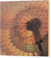 Dandelion Illusion Wood Print