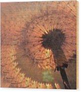 Dandelion Illusion Wood Print