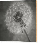 Dandelion In Black And White Wood Print
