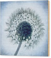 Dandelion In Blue Wood Print
