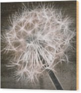 Dandelion In Brown Wood Print