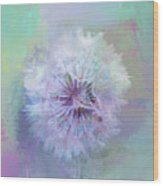Dandelion In Pastel Wood Print