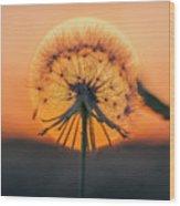 Dandelion In The Sun Wood Print