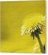 Dandelion In Yellow Wood Print