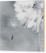 Dandelion Macro Make A Wish Wood Print