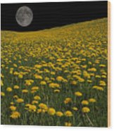 Dandelion Moon Wood Print