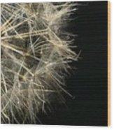 Dandelion Nineteen Wood Print