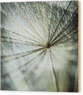 Dandelion Petals Wood Print