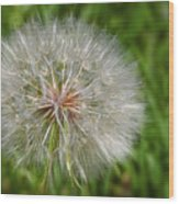 Dandelion Puff - The Summer Queen Wood Print by Christine Till