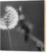 Dandelion Puff In Black And White Wood Print