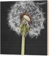Dandelion Seed Wood Print