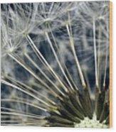 Dandelion Seed Head Wood Print by Ryan Kelly
