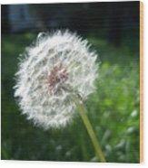 Dandelion Seeds 101 Wood Print