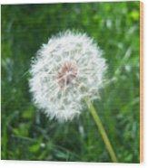 Dandelion Seeds 103 Wood Print
