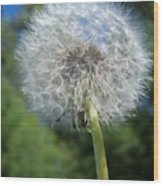 Dandelion Seeds 110 Wood Print