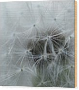 Dandelion Seeds Close-up Wood Print