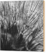 Dandelion Seeds I Wood Print