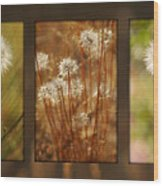 Dandelion Series Wood Print