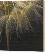 Dandelion Seventy Four Wood Print