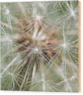 Dandelion Sparkles Wood Print