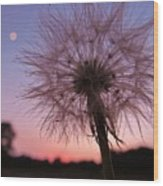 Dandelion Sunset Wood Print