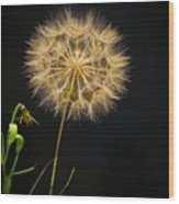 Dandelion Thirty Nine Wood Print