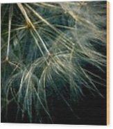 Dandelion Thirty Seven Wood Print