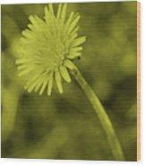 Dandelion Tint Wood Print