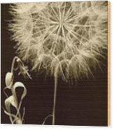 Dandelion Twenty Eight Wood Print