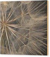 Dandelion Twenty Two Wood Print