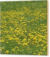 Dandelion Wine Wood Print
