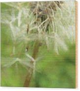 Dandelion Wish 7 Wood Print